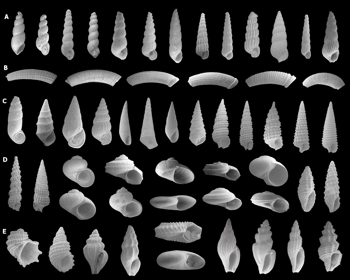 Micromollusks of the Lower Pinecrest Beds, Upper Tamiami Formation, Sarasota County, Florida